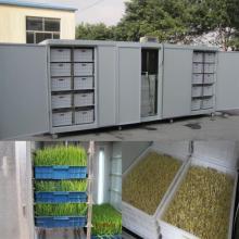 Grain Processing Mung Bean Sprout Growing Machine