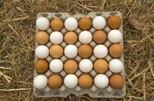 POULTRY FRESH EGGS, CHICKEN EGGS , White and brown eggs