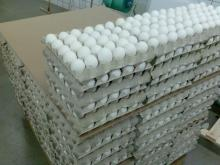 Fresh Eggs in bulk , WHITE, BROWN FRESH EGGS