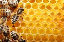 Quality Natural Honey for sale