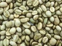 Quality Robusta Coffee