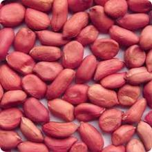 Red Skin Peanut Kernel for sale