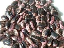 Large Black Purple Speckled Kidney Beans
