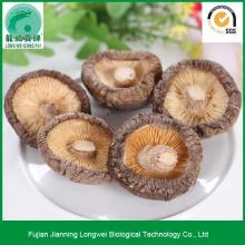 Dried Golden Oak Shiitake Mushroom