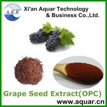 Grape Seeds Extract with Polyphenols 95% and  water  soluble grape seed extract 95%