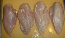 Frozen Boneless Halal Chicken Breast