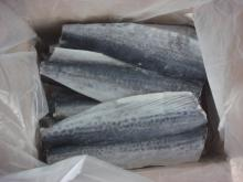 spanish mackerel fillet IQF