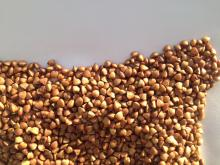 Toasted buckwheat kernels in Inner Mongolia China