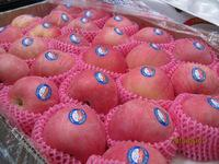 New Crop South African Fresh Fuji AppleGRADE a FOR SALE Hot Sales