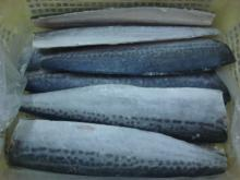 Newly processed frozen Spanish mackerel fillets