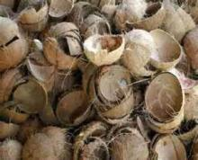Coconut shell for sale with low price