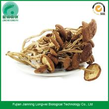 Tea tree mushroom dried willow mushrooms