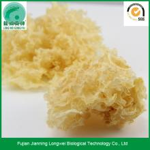 Parted dry tremella snow white fungus collagen