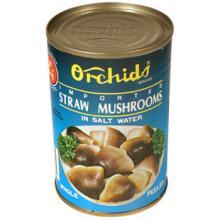 Straw mushrooms