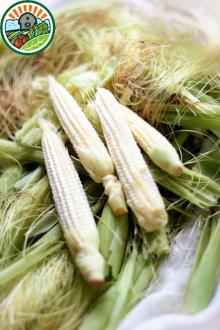 Best sales ending season 2015 Excellent nutritrion and quality IQF Baby corn whole and cut type 1