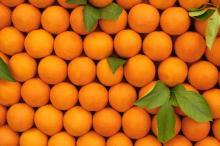 Fresh Citrus Fruits, Valencia Oranges & Lemons high quality