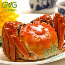Chinese Hairy Crab Mitten Crab
