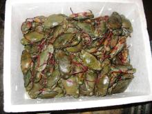 Live Green Mud Crabs