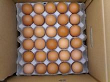 Farm Fresh Table Eggs Brown And White Eggs
