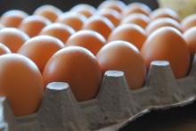 Available now Fresh Brown Chicken Eggs for sale at cheap rate