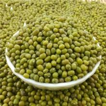 Green Mung bean for sale
