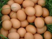 Fresh brown and white Shell Chicken Eggs