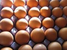 Fresh Farm Chicken Eggs