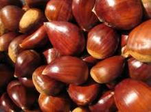 Organic Fresh Chestnut For Sale