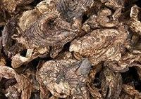 dried sarcodon aspratus ready