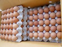 Fresh farm white and brown Chicken eggs