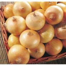 Yellow onion with best price