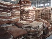 Wet salted cow Hides/skin, cow heads and animal skins