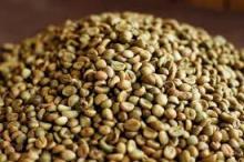 Vietnam Arabica Coffee HIGH QUALITY to Sale