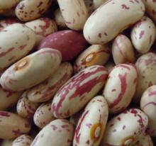 Long Shape Light Speckled Kidney Bean
