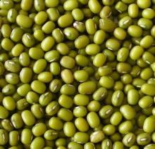 green   beans ,  mung   beans  3.5cm for exportation