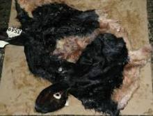 Top Quality Wet Salted Cow Head Hides