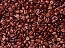 coffee bean robusta coffee