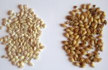 Pearled Barley vs. Hulled Barley
