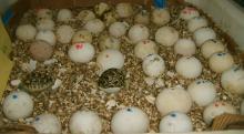 PARROTS AND FRESH LAID PARROT EGGS FOR SALE