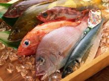 hot sale live seafood fish