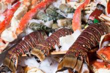 Frozen Tilapia Fish Frozen Fillet iqf Seafood