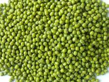 Top Quality Green Mung Bean