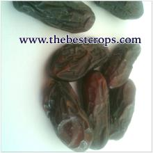Iranian Dried Date, Top Quality