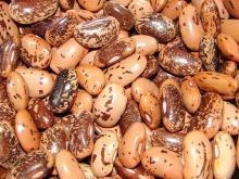 Dark Red or Red Kidney Beans , Light Speckled Kidney Beans (LSKB), Pinto Beans or Sugar Beans