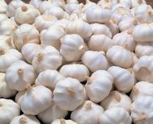 Normal Pure White Fresh Garlic