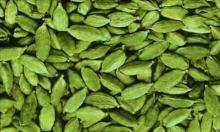 Fresh Green Cardamomm Spice