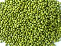 Good Quality Green Mung Beans 2015 crop year