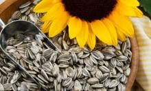 Sunflower Seed for sale