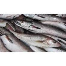 Quality Frozen Horse Mackerel and Sardine Fish for Export in Stock