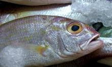 HIGH QUALITY FROZEN MACKEREL FISH FOR SALE